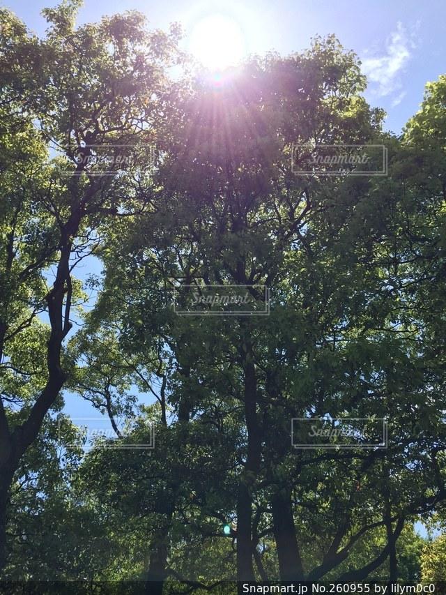 自然の写真・画像素材[260955]