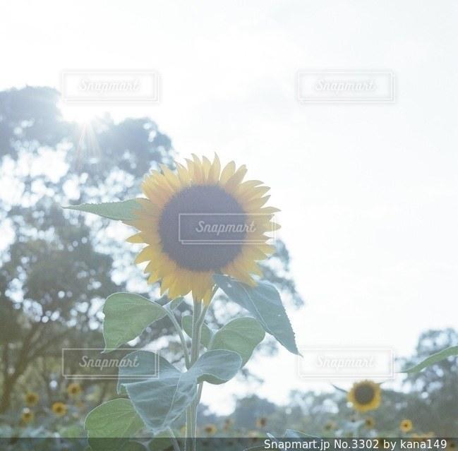 自然の写真・画像素材[3302]