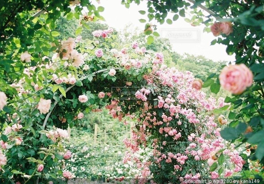 自然の写真・画像素材[3280]
