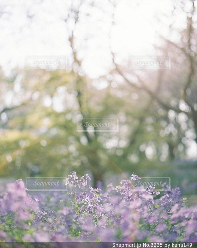 自然の写真・画像素材[3235]