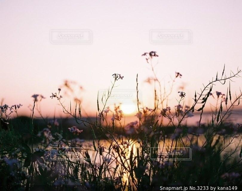 自然の写真・画像素材[3233]