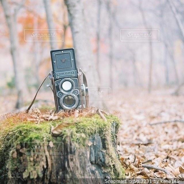 自然の写真・画像素材[3231]