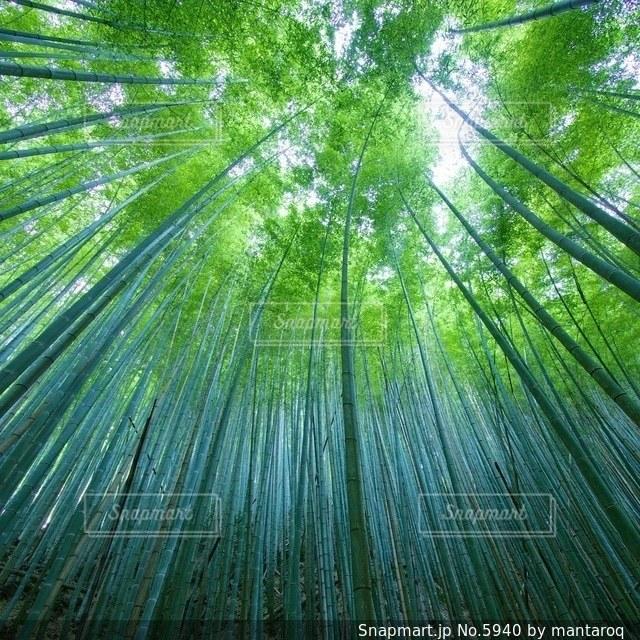 自然の写真・画像素材[5940]
