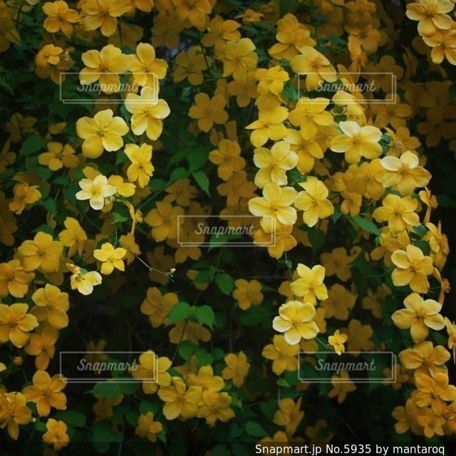 自然の写真・画像素材[5935]