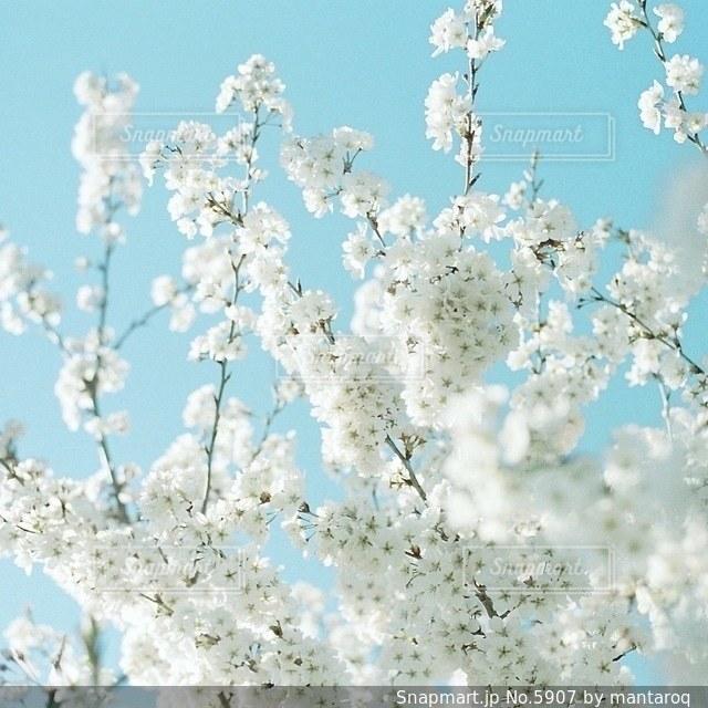 風景 - No.5907