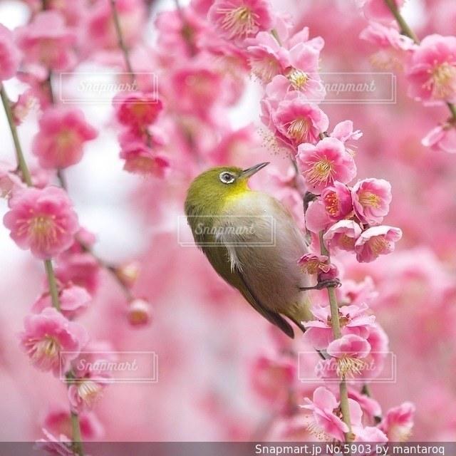 自然の写真・画像素材[5903]