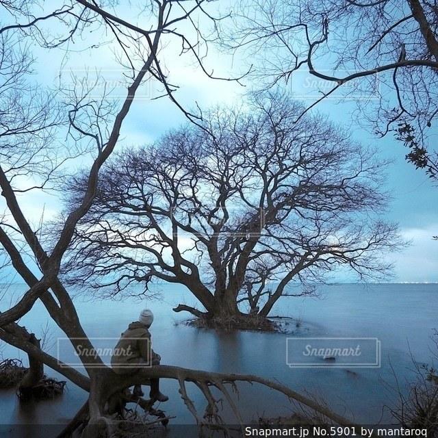 風景の写真・画像素材[5901]