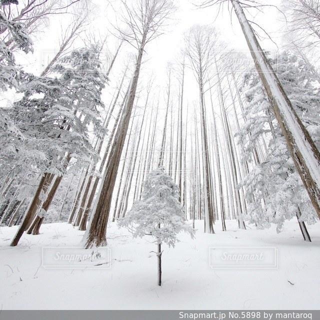 自然の写真・画像素材[5898]