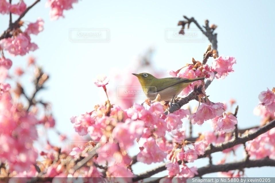 自然の写真・画像素材[5880]