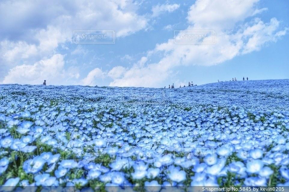 風景の写真・画像素材[5845]