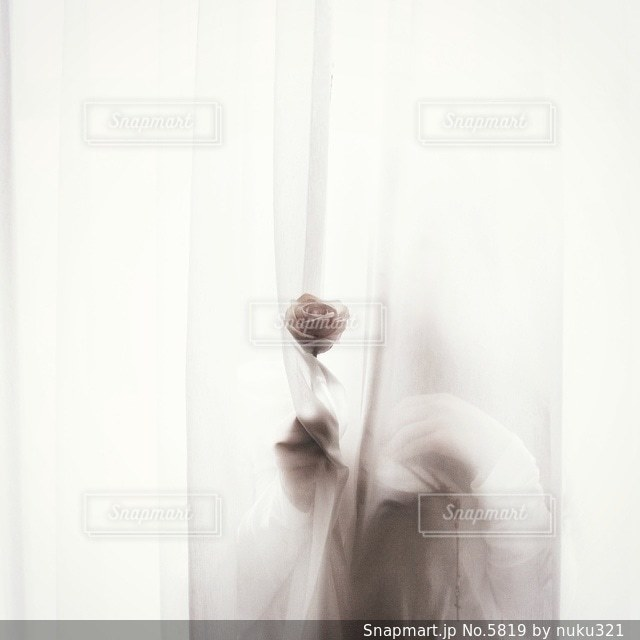 花の写真・画像素材[5819]