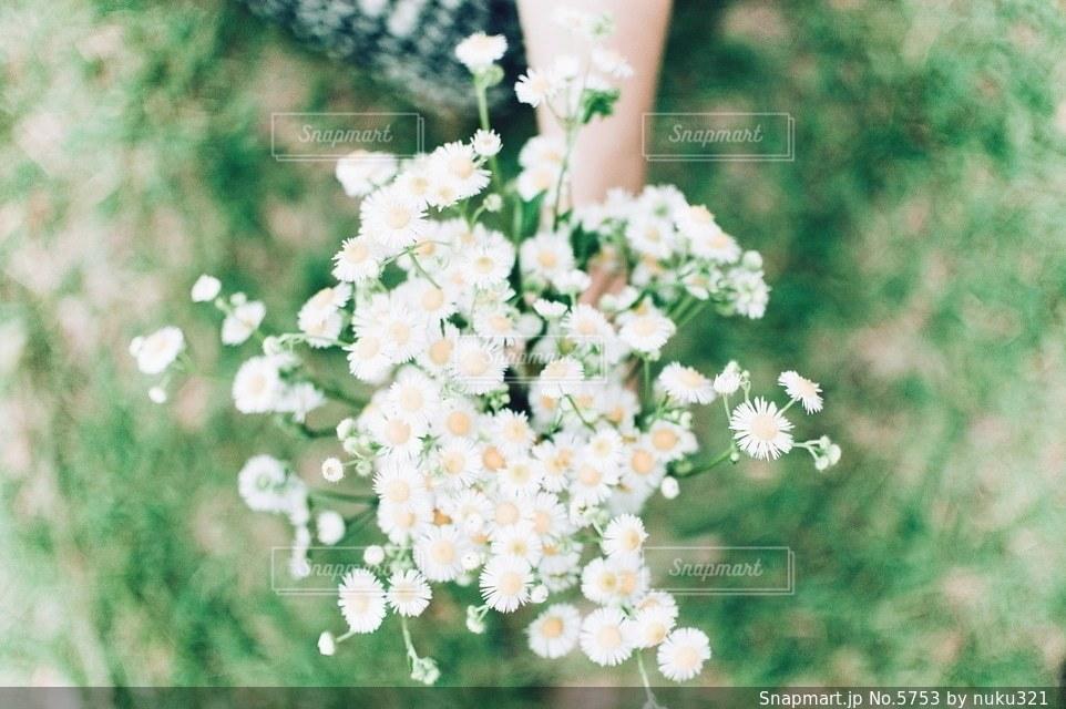 花の写真・画像素材[5753]