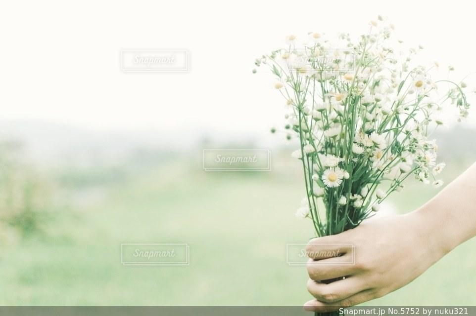 花の写真・画像素材[5752]