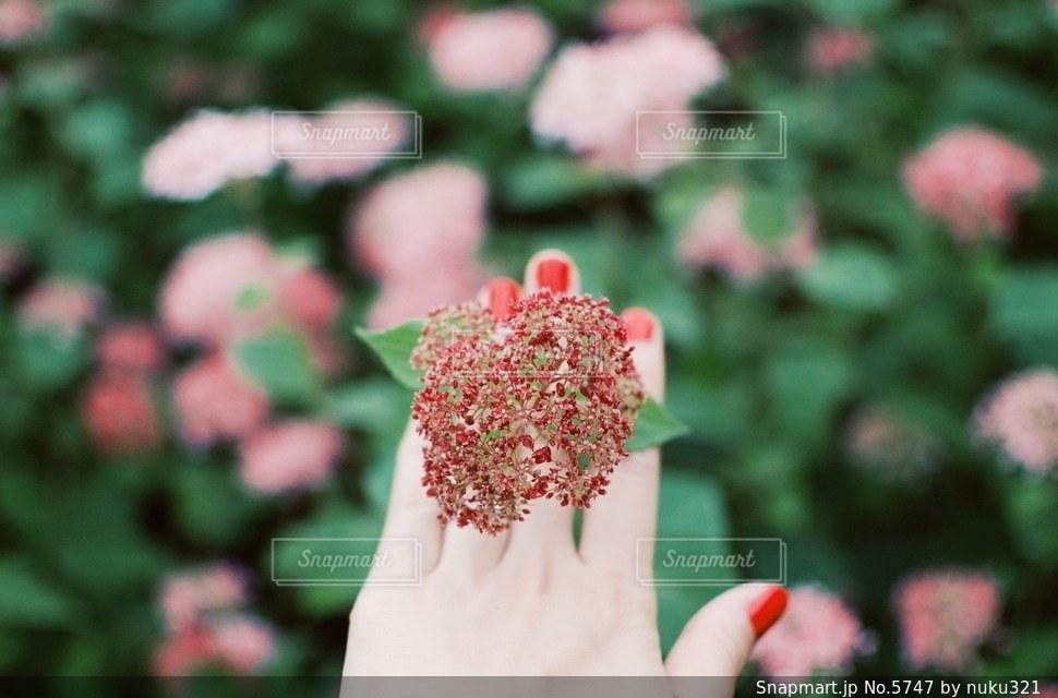 花の写真・画像素材[5747]