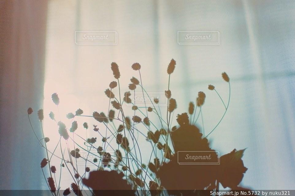 花の写真・画像素材[5732]
