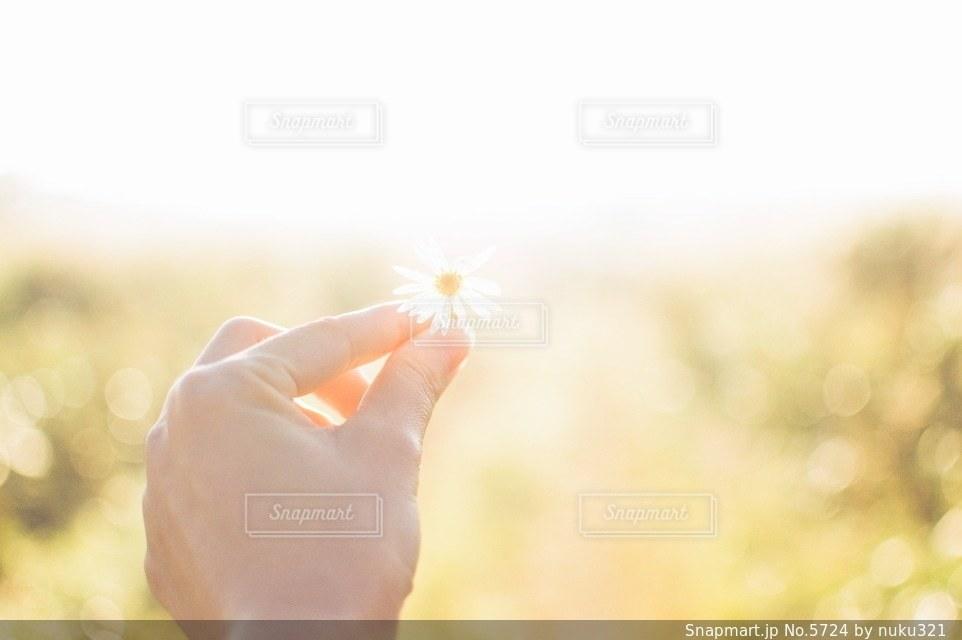 花の写真・画像素材[5724]
