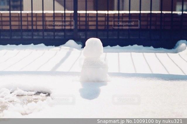 雪の中でシロクマの写真・画像素材[1009100]
