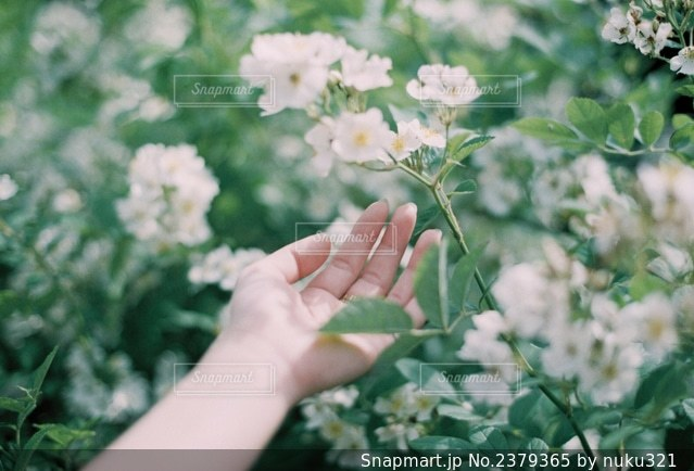 花を持つ人のクローズアップの写真・画像素材[2379365]