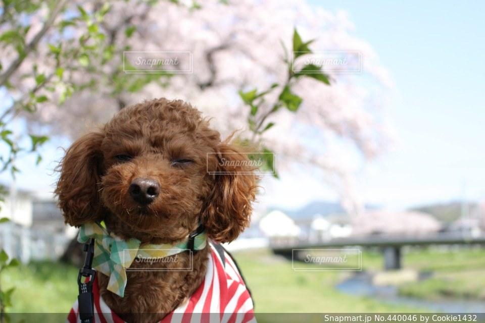 犬の写真・画像素材[440046]