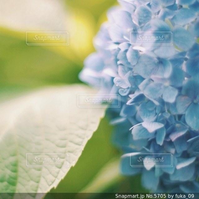 自然の写真・画像素材[5705]