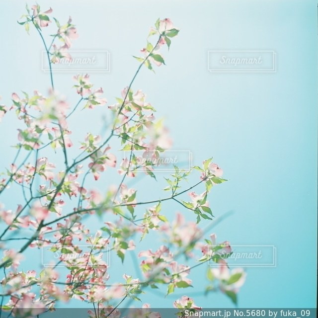 自然の写真・画像素材[5680]