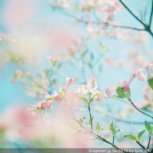 自然の写真・画像素材[5679]