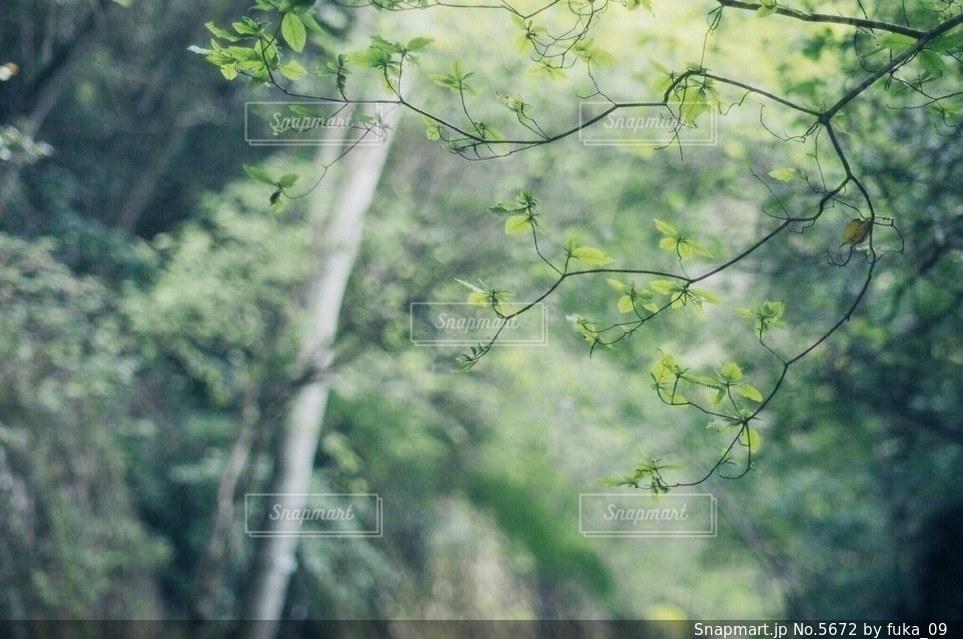 自然の写真・画像素材[5672]