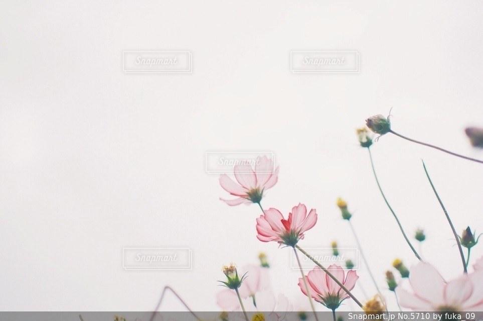 花の写真・画像素材[5710]