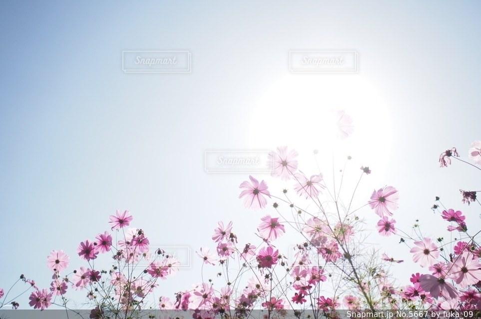自然の写真・画像素材[5667]