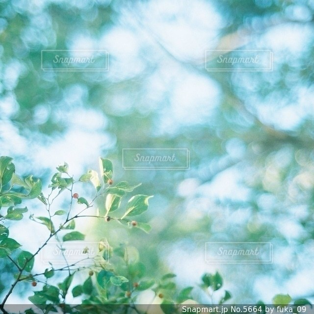 自然の写真・画像素材[5664]