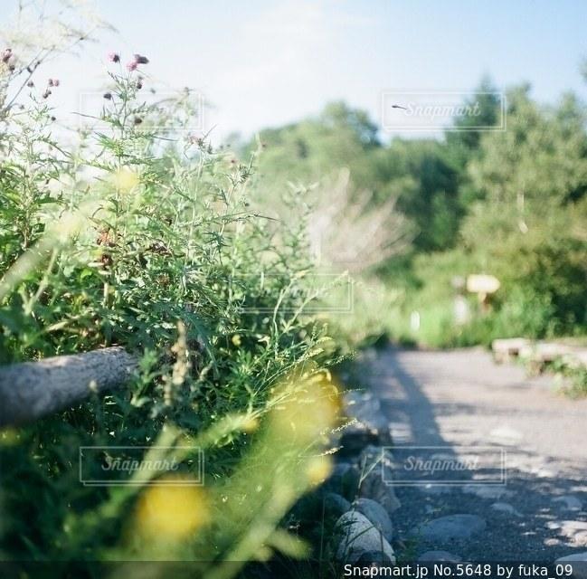 花の写真・画像素材[5648]