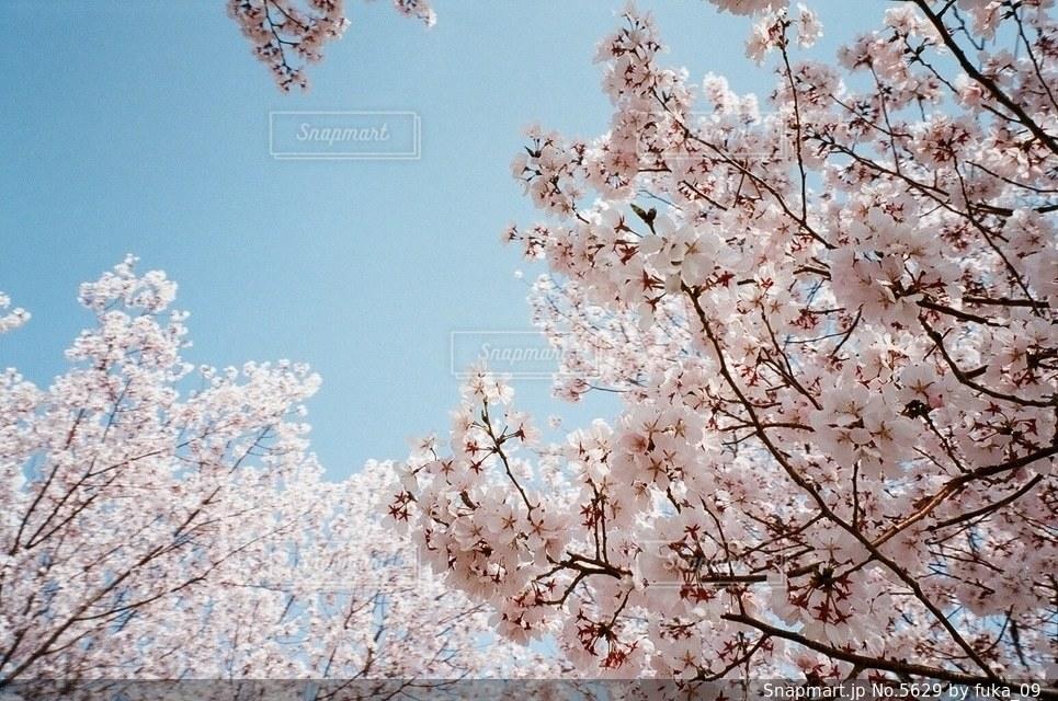 自然の写真・画像素材[5629]