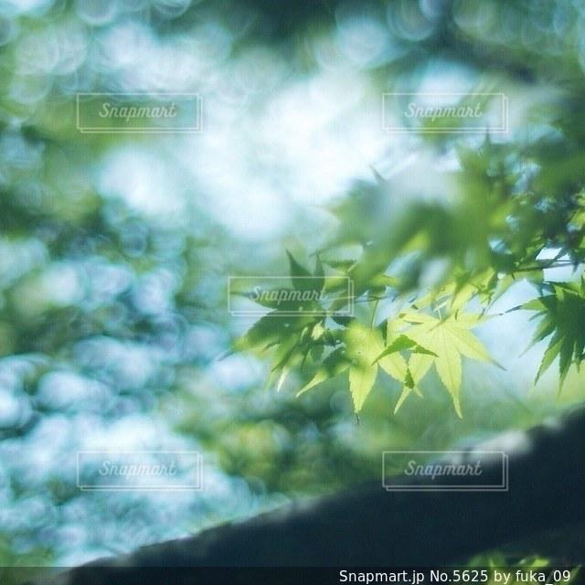 自然の写真・画像素材[5625]