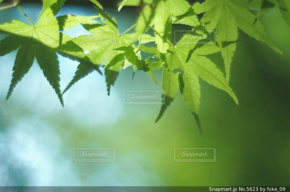 自然の写真・画像素材[5623]