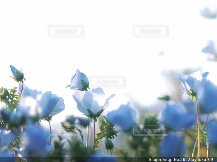 自然の写真・画像素材[5622]