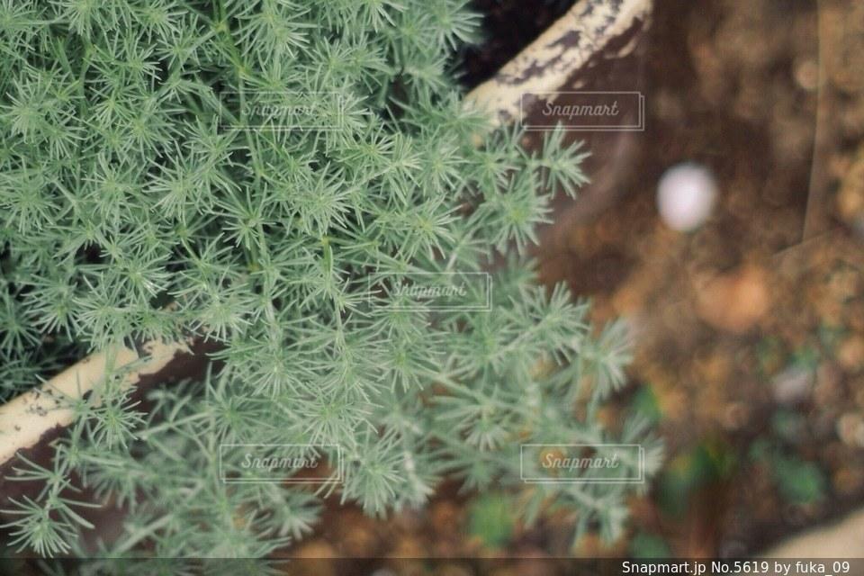自然の写真・画像素材[5619]
