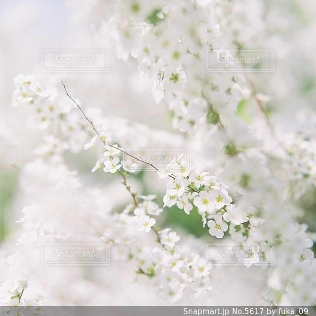 自然の写真・画像素材[5617]
