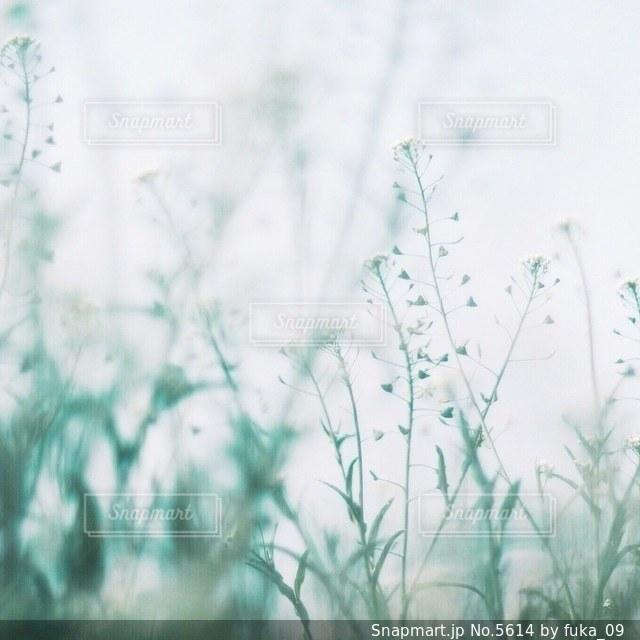 自然の写真・画像素材[5614]