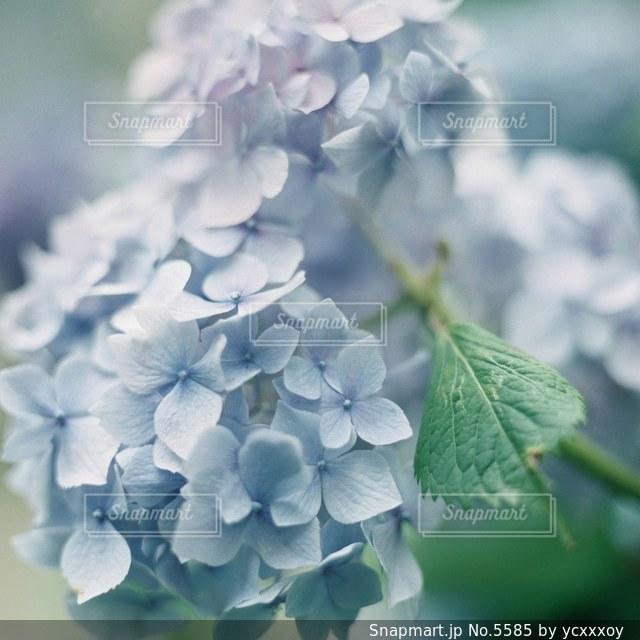 花の写真・画像素材[5585]