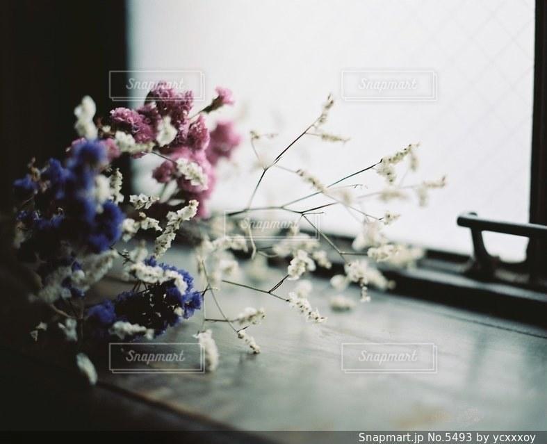 花の写真・画像素材[5493]