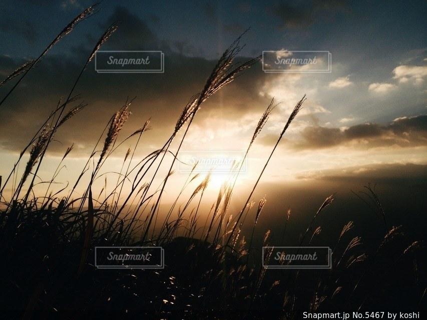 自然の写真・画像素材[5467]