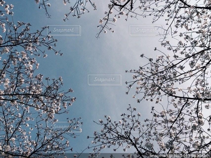 風景の写真・画像素材[5443]