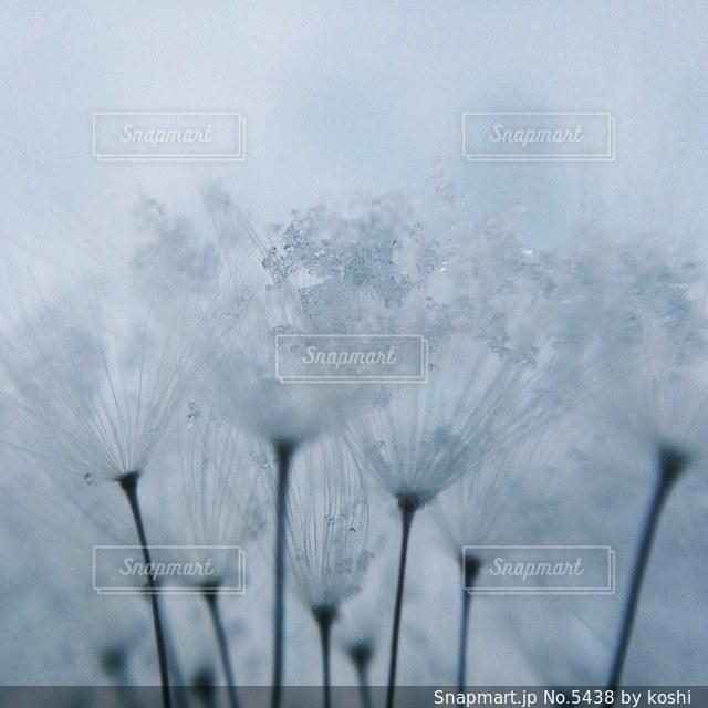 風景の写真・画像素材[5438]