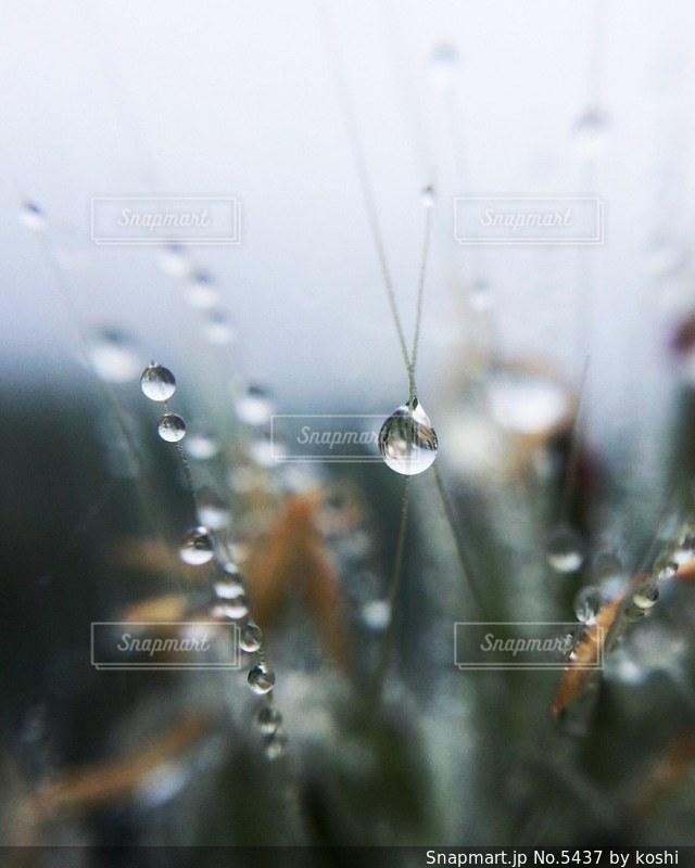 風景の写真・画像素材[5437]