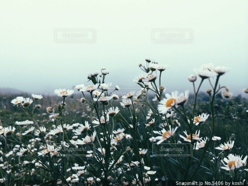 自然の写真・画像素材[5406]