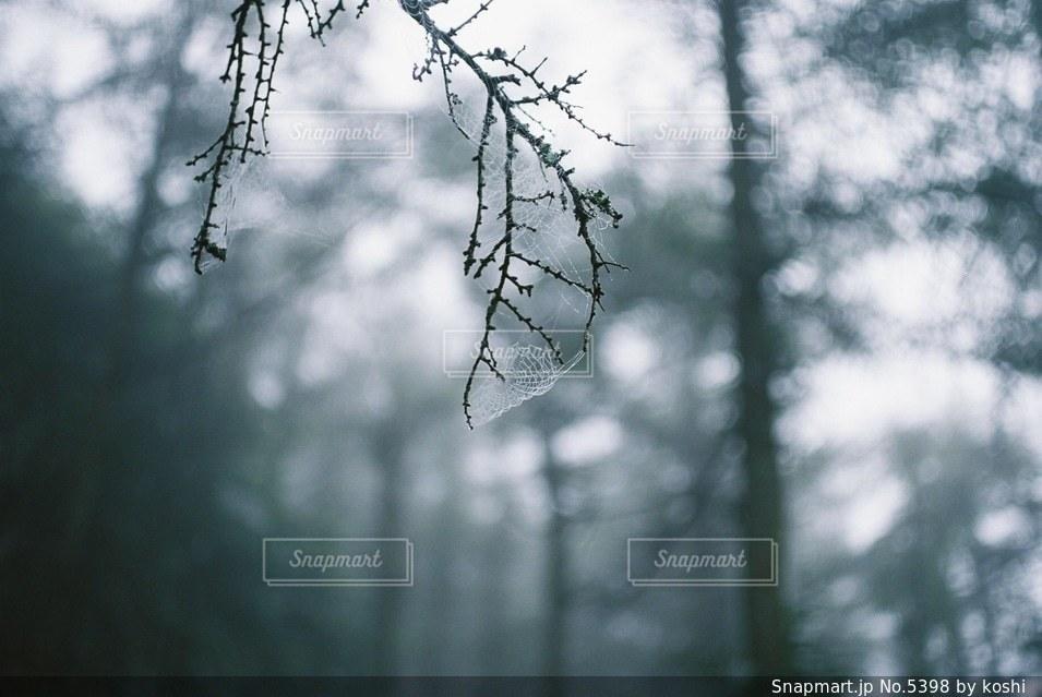 自然の写真・画像素材[5398]