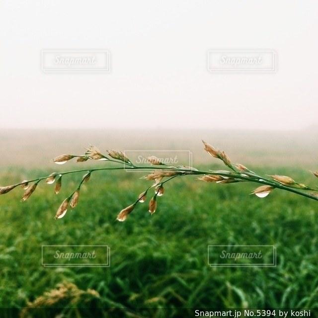 自然の写真・画像素材[5394]