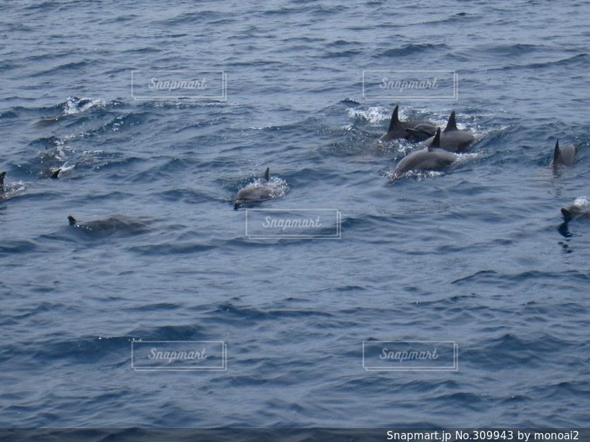 海,イルカ,グアム,バケーション,クルーズ