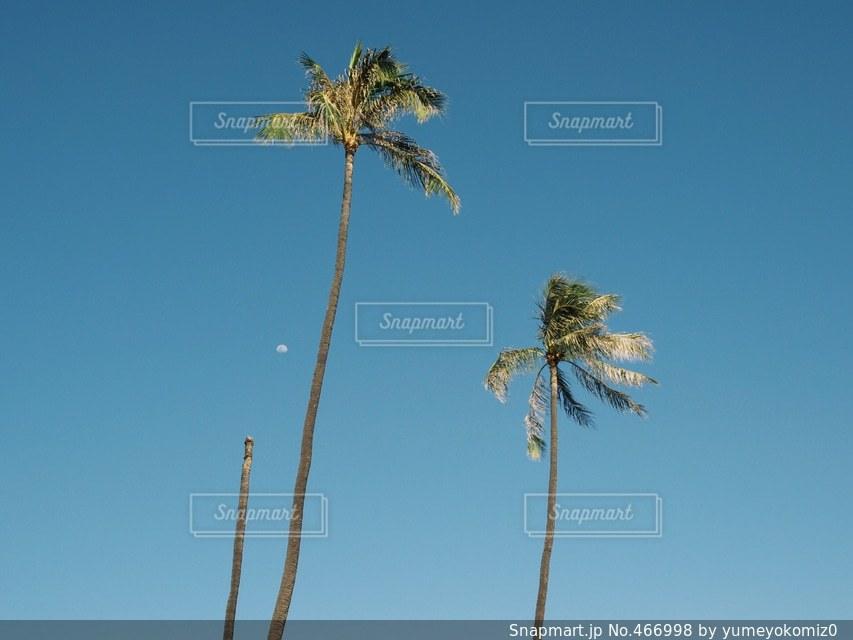 海の写真・画像素材[466998]