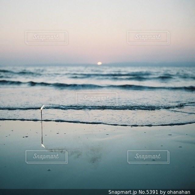 自然の写真・画像素材[5391]